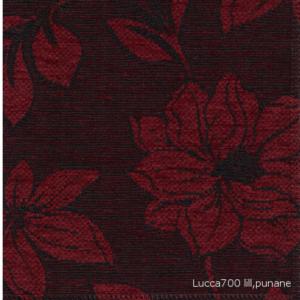 Lucca700 lillunane